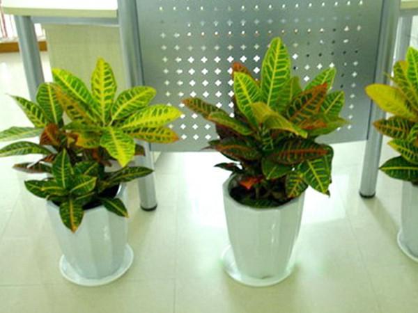 植物租赁公司秋季生长旺盛的植物是铁线莲