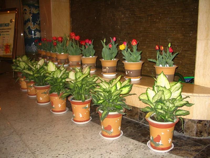 上海的冬天植物租赁公司里面金橘养护需要注意什么