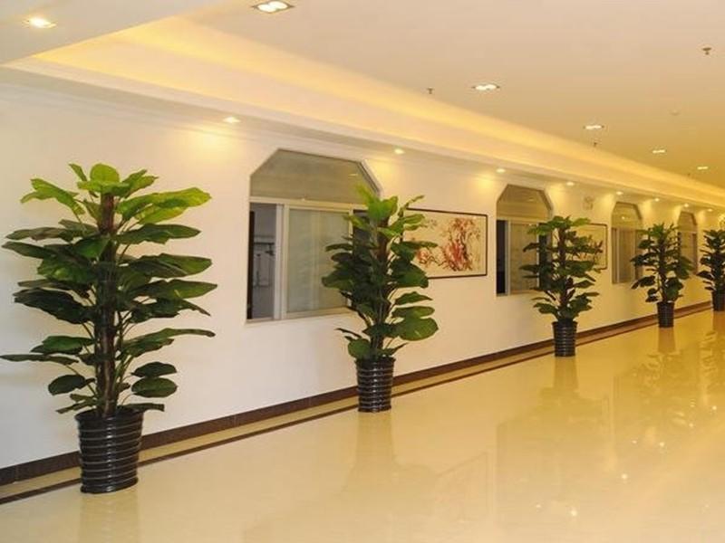 常见的上海植物租赁过程中十大去甲醛植物