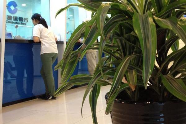 银行植物租摆案例