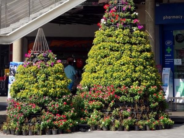 商场植物租摆案例