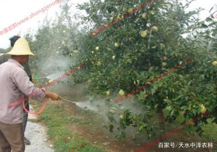 苹果树病虫害如何科学防治