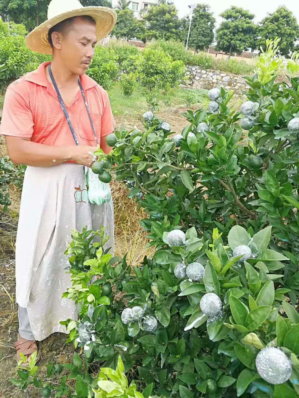 广西某基地橘美产品成功案例