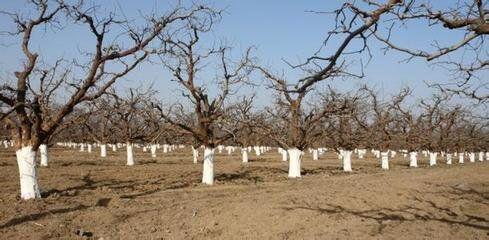 美涂在树干涂白方面的成功案例